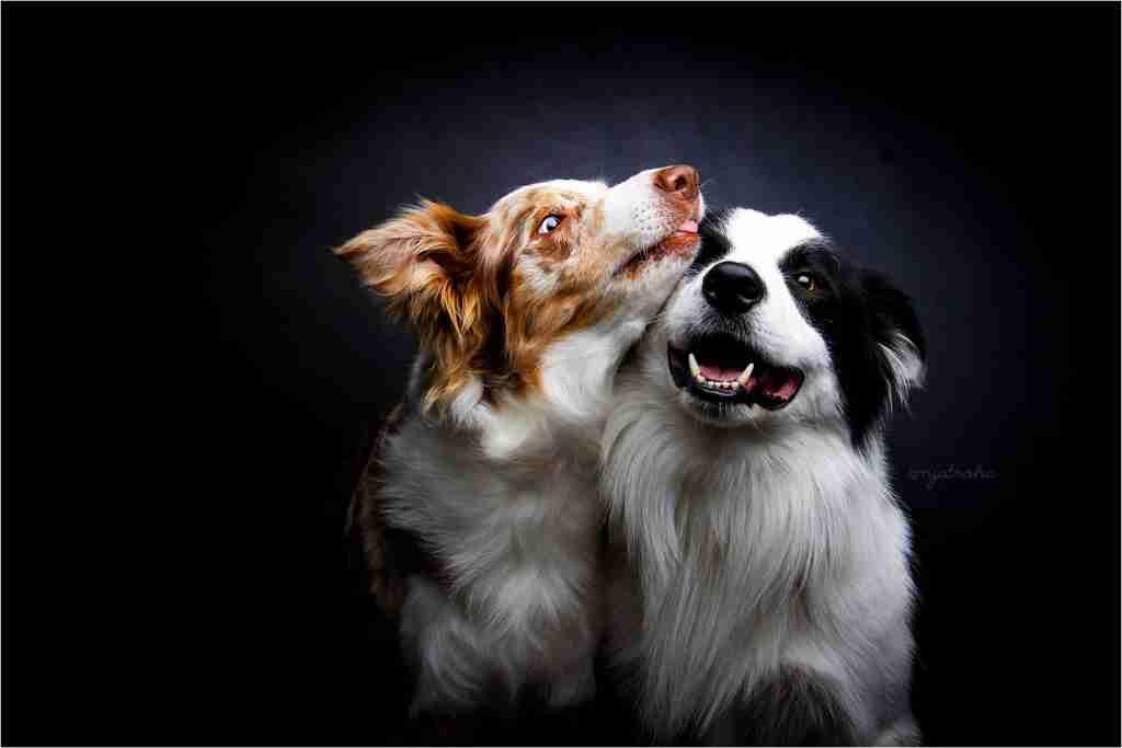 Oglaševanje, Obrazec za objavo Pasji fotografi