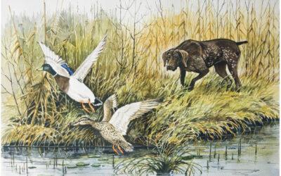 25. Državna tekma lovskih psov v vodnem delu – CACT