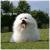 Profile picture of Psarna Figaro in Dingo