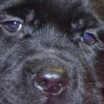 Profile picture of Monte Gerass