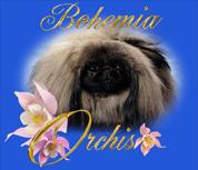 Bohemia Orchis