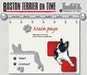 Boston Terier on Time