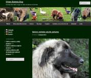 Élevage Chien Estrela Dog
