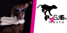 Pasje Mesto - salon za nego psov