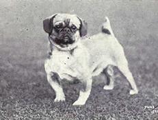 HAPPA (Happa dog)