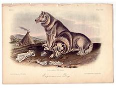 Izumrle pasme psov