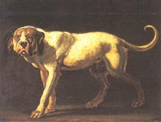 KUBANSKI MASTIF (Cuba Mastiff – Cuban Dogge)