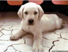 Nakup psa v tujini ter starost psa ob nakupu