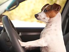 Namestitev psa v vozilu ter skrb za čistočo pasjega bivališča in okolja