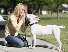 Nasveti za komuniciranje z gluhim psom ter vzgoja (učenje) gluhega psa