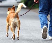 Nega psa po sprehodu ter pregretost ali podhladitev pri psu