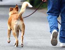 Nega psa po sprehodu