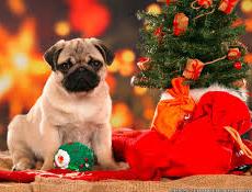 Nasveti za varnejše praznike s psom ali mačko