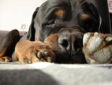 Prva pomoč pri psu