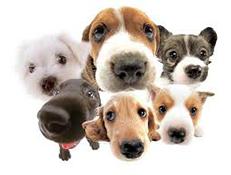 Pasme psov registrirane pri drugih organizacijah po svetu
