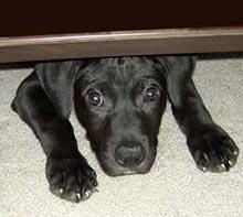 pes pod posteljo