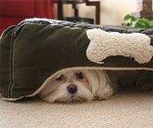 Strah pred hrupom pri psih, pes se skriva