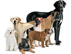 Pasme psov po Fci skupinah
