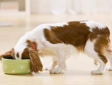 Prehrana psov