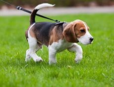 Privajanje psa na vozilo ter ovratnica in povodec