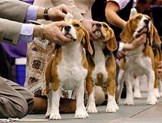 Vzrejni pregled ter razstava psov
