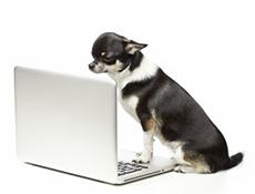 Registri psov po svetu