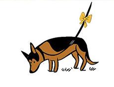 Rumeni smrček si – The Yellow Dog Project