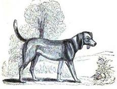Severni podeželjski pes
