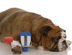 Sladkorna bolezen (Diabetes) pri psih