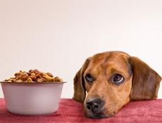 Splošno o pasji prehrani