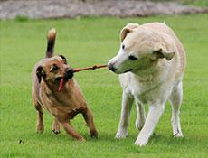 Splošno o psih