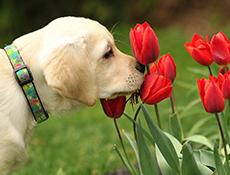 Strupene rastline za pse in mačke