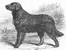 Sv. Johnsov vodni pes