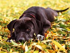 Vloga psa v človekovem okolju