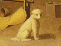 Volnati pes Salish
