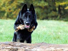 Vzgoja in socializacija psa