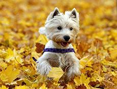 Zagon imunskega sistema – Ko pride jesen!