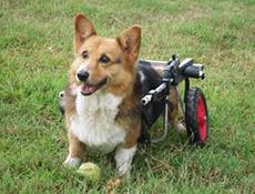 Zakaj posvojiti invalidnega psa – štirje dobri razlogi