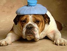 Zdravje psov